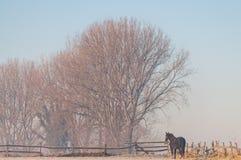 Een paard in een ijzig landschap royalty-vrije stock fotografie