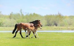 Een paard met een veulen royalty-vrije stock afbeelding