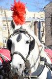 Een paard met pluimen royalty-vrije stock afbeelding