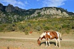Een paard met een veulen die in de vallei van spoken in vicin weiden royalty-vrije stock fotografie