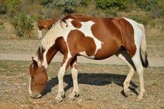 Een paard met een veulen die in de vallei van spoken in vicin weiden stock afbeelding