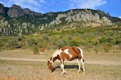 Een paard met een veulen die in de vallei van spoken in vicin weiden royalty-vrije stock afbeeldingen