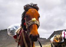Een paard onder kailash Royalty-vrije Stock Afbeelding