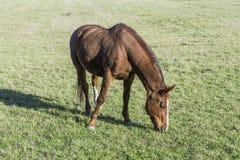 Een paard op de weide royalty-vrije stock afbeeldingen
