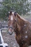 Een paard op een sneeuwdag Stock Fotografie