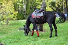 Een paard op een weiland Royalty-vrije Stock Afbeelding