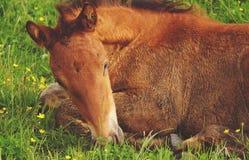 Een paard op het gras, de zomertijd Royalty-vrije Stock Fotografie