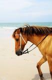 Een paard op het strand Stock Foto's