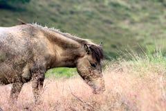 Een paard tussen het hoge bloeiende gras Royalty-vrije Stock Fotografie