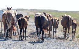 Een paard in een weiland in de woestijn Stock Foto's