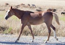Een paard in een weiland in de woestijn Royalty-vrije Stock Afbeelding