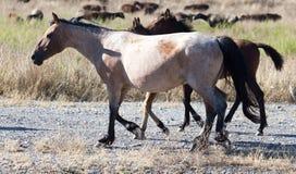 Een paard in een weiland in de woestijn Royalty-vrije Stock Foto's