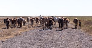 Een paard in een weiland in de woestijn Stock Afbeeldingen