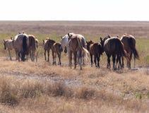 Een paard in een weiland in de woestijn Royalty-vrije Stock Foto