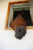 Een paardhoofd Stock Afbeelding