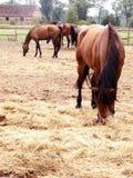 Een paardlandbouwbedrijf Royalty-vrije Stock Afbeelding