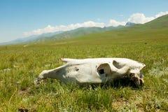 Een Paardschedel op Kirgiz-Weiland Royalty-vrije Stock Afbeeldingen