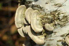 Een paddestoel op een boom op een Zonnige dag Stock Afbeelding