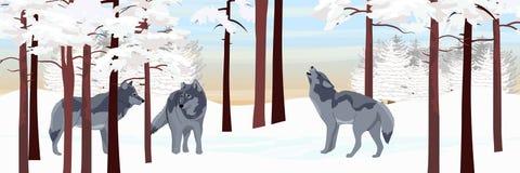 Een pak van drie wolven in een bos van de de winterpijnboom royalty-vrije illustratie