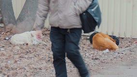 Een pak verdwaalde hondenslaap op een rommel gemaakt van gazon in de winter Vacationings verdwaalde dieren in de stad De mensen g stock videobeelden