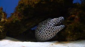 Een paling in een aquarium stock video