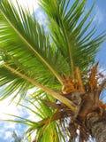 Een palm Royalty-vrije Stock Fotografie
