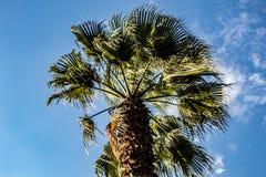 Een palm die door de wind wordt bewogen royalty-vrije stock afbeeldingen