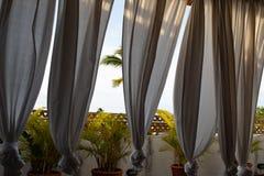 Een palm die door witte gordijnen in een exclusieve dakplaats gluurt in de Caraïben stock foto
