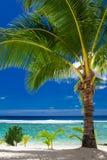 Een palm die tropisch strand op Roratonga, Cook Island overzien royalty-vrije stock fotografie