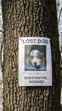 Een pamflet met informatie over de ontbrekende herdershond hangt op een boom in het park Het missen huisdieren stock afbeeldingen