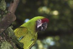 Een papegaai in een dierentuin Royalty-vrije Stock Foto's