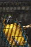 Een papegaai in een kooi in een dierentuin Royalty-vrije Stock Foto's