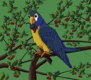Een papegaai op een boom Stock Foto's