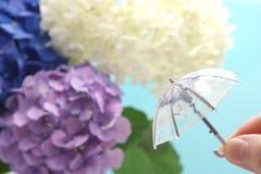 Een paraplu met een hydrangea hortensiaachtergrond die ter beschikking wordt gehouden Regenachtig seizoenconcept royalty-vrije stock fotografie