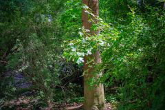 Een Park met rivier en bomen stock afbeeldingen