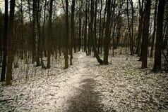 In een Park van Moskou Royalty-vrije Stock Foto's