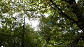 Een parksteeg van esdoorn en lindebomen en een fonkelende zon in de herfst stock videobeelden