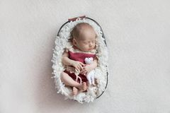 Een pasgeboren babyslaap in een mand in een roze lichaam met een klein stuk speelgoed stock afbeelding