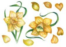 Een patroon met een gele gele narcis Royalty-vrije Stock Fotografie