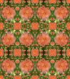 Een patroon van rozen met dauw daalt Royalty-vrije Stock Fotografie