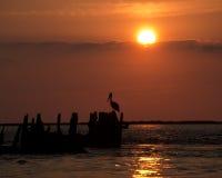 Een pelikaan in Silhouet royalty-vrije stock afbeeldingen