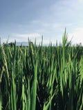 Een perceel van land met padievelden stock afbeeldingen