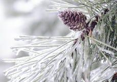 Een pijnboomboom die in ijs wordt behandeld Royalty-vrije Stock Afbeeldingen