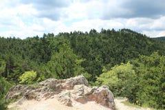 Een pine-wood bos stock afbeelding