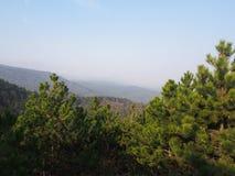 Een pine-wood bos stock fotografie