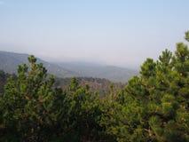 Een pine-wood bos royalty-vrije stock foto