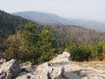 Een pine-wood bos stock afbeeldingen