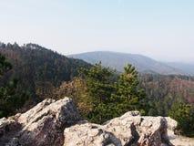 Een pine-wood bos royalty-vrije stock foto's