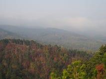 Een pine-wood bos royalty-vrije stock fotografie