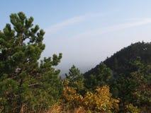 Een pine-wood bos stock foto